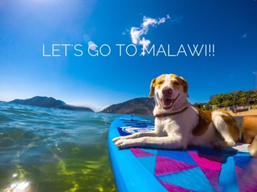 Travel with your dog to Malawi? YES!