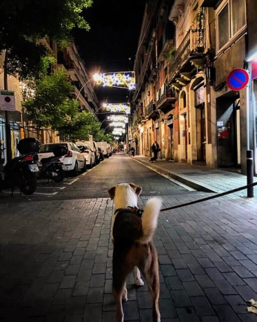Ginger and the Christmas' lights are lighten up for first time